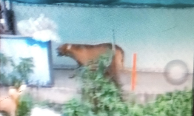 Kinh hoàng: Chó Pitbull gần 60kg cắn chết người trong quán cà phê, tấn công luôn chủ - Ảnh 1.