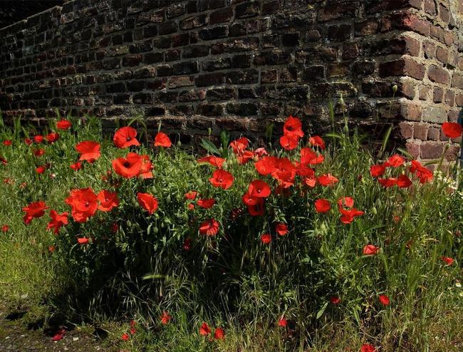 """Gia chủ biến mất nhiều năm, sân nhà chợt mọc lên vườn hoa lạ, cảnh sát kiểm tra liền """"vén màn"""" sự thật hãi hùng - Ảnh 1."""