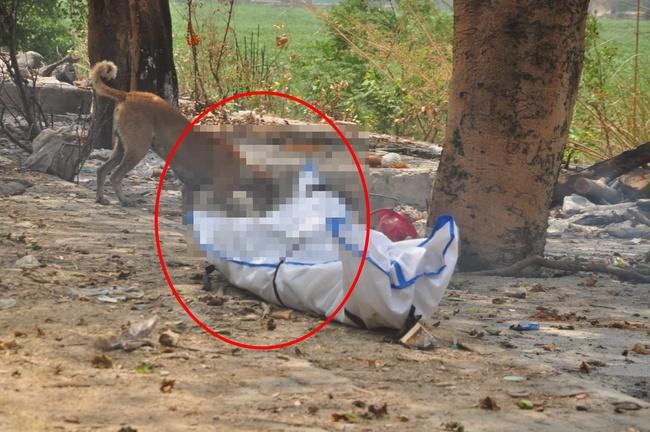 """Cảnh tượng đau xé lòng giữa """"địa ngục"""" ở Ấn Độ: Thẩm phán qua đời vì Covid-19, thi thể bị chó hoang cắn xé khi đang chờ hỏa táng - Ảnh 1."""