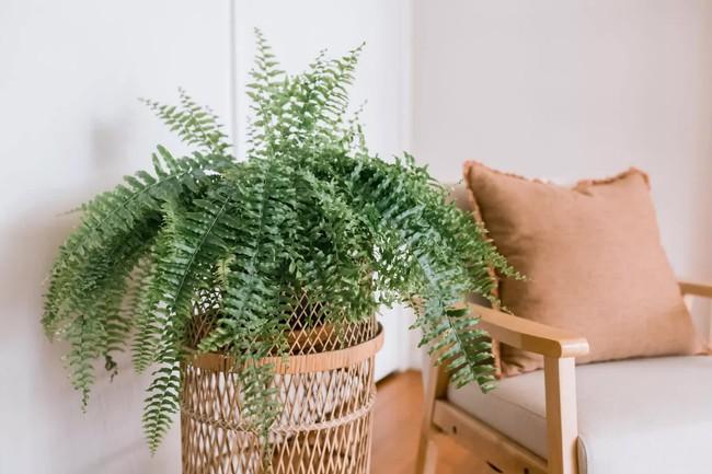 Đây là cách giúp bạn phân biệt thực vật phong thủy tốt và xấu - Ảnh 2.