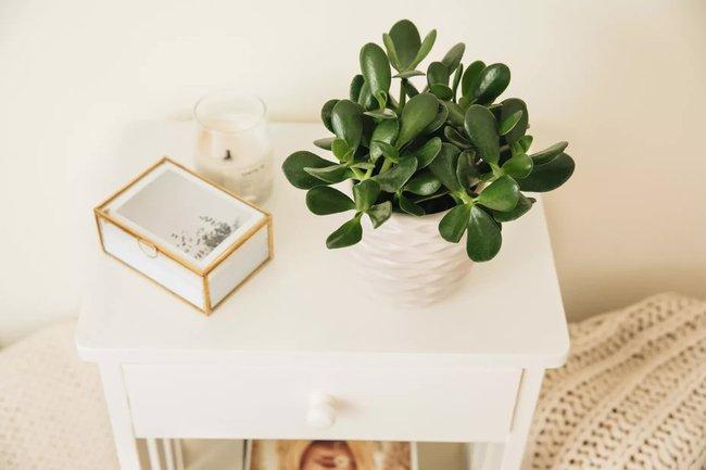 Đây là cách giúp bạn phân biệt thực vật phong thủy tốt và xấu - Ảnh 3.
