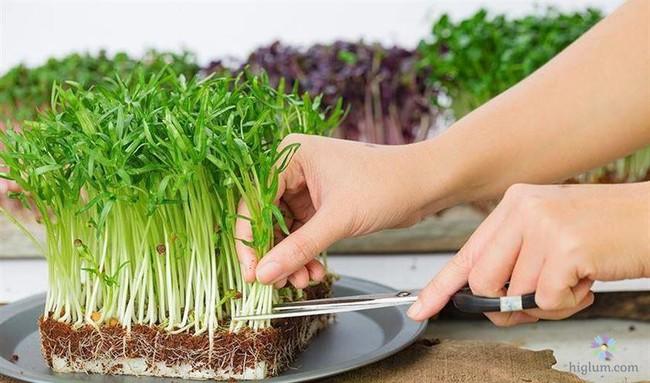 Rau mầm trồng tại nhà đơn giản - giá rẻ, khi chế biến món ăn lại cực ngon, chị em đừng bỏ lỡ! - Ảnh 4.