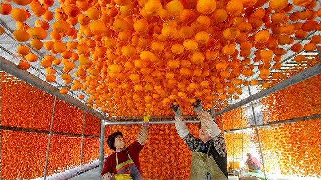 """Mỗi độ thu về, nông dân Nhật Bản lại treo hàng nghìn quả hồng lên giàn, tỉ mỉ làm ra đặc sản đắt đỏ mà ngon """"nuốt lưỡi"""", ăn 1 lần nhớ mãi không quên - Ảnh 2."""