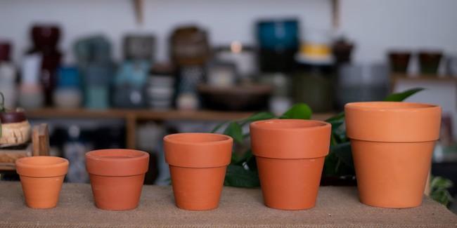 Cách trồng cây chanh từ hạt cho quả căng tròn, mọng nước vượt mong đợi - Ảnh 3.
