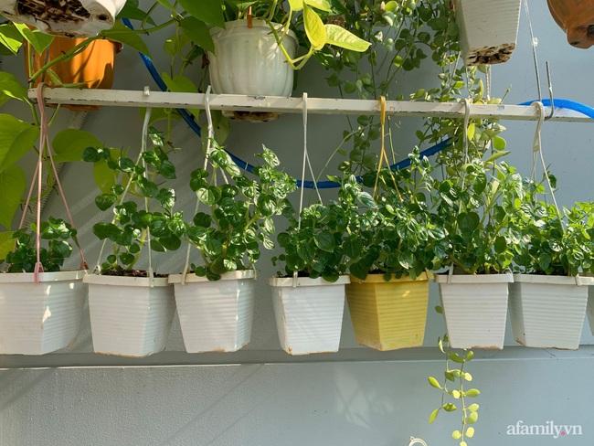 Những điều bắt buộc phải biết nếu muốn trồng rau trên ban công chung cư - Ảnh 7.