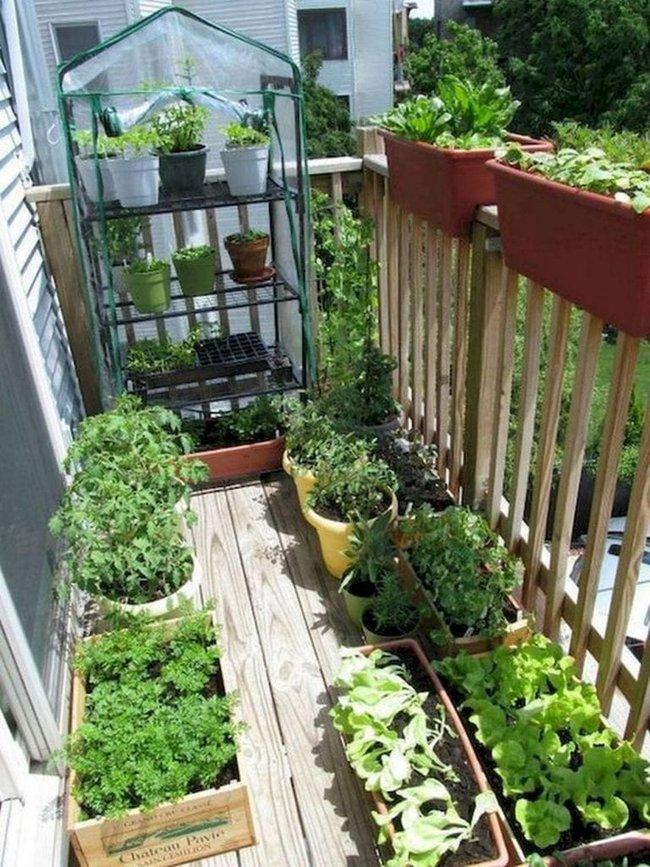 Những điều bắt buộc phải biết nếu muốn trồng rau trên ban công chung cư - Ảnh 13.