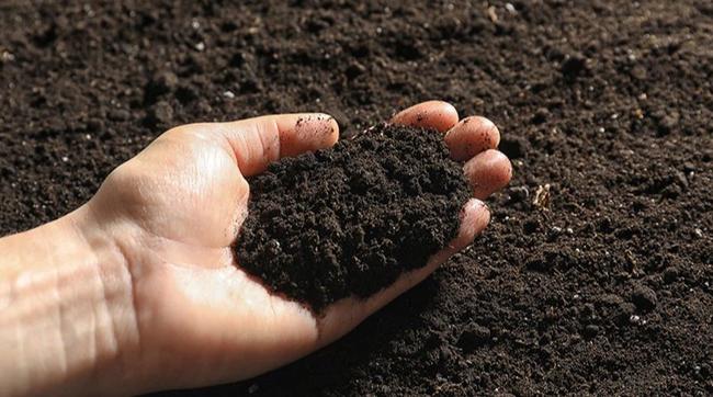 Những điều bắt buộc phải biết nếu muốn trồng rau trên ban công chung cư - Ảnh 1.