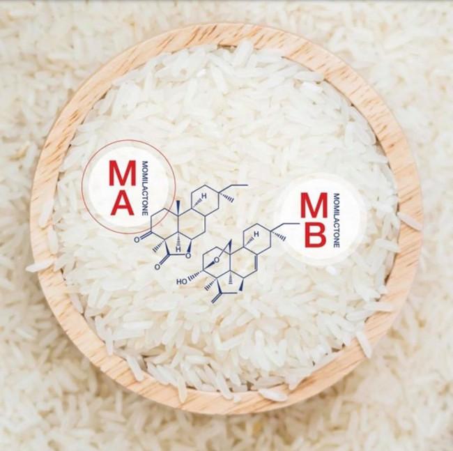 """""""Bội thực"""" gạo lứt, gạo đen, thử ngay loại gạo này có hai hợp chất quý cực tốt cho bệnh nhân tiểu đường, tim mạch và cả giảm cân - Ảnh 3."""