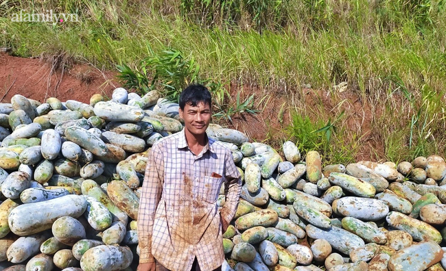 Giải cứu cánh đồng trăm tấn