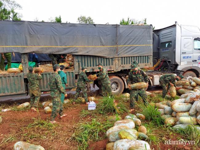 """Giải cứu cánh đồng trăm tấn bí """"khủng"""", giúp người cha 6 con ở Đắk Nông thoát bi kịch mất nhà giữa mùa dịch - Ảnh 12."""