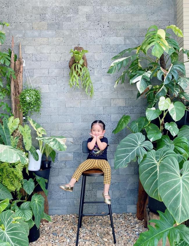 """Nhà Phan Hiển - Khánh Thi có vườn cây tiền tỷ, nhiều cây đột biến """"đếm lá tính tiền"""" - Ảnh 4."""