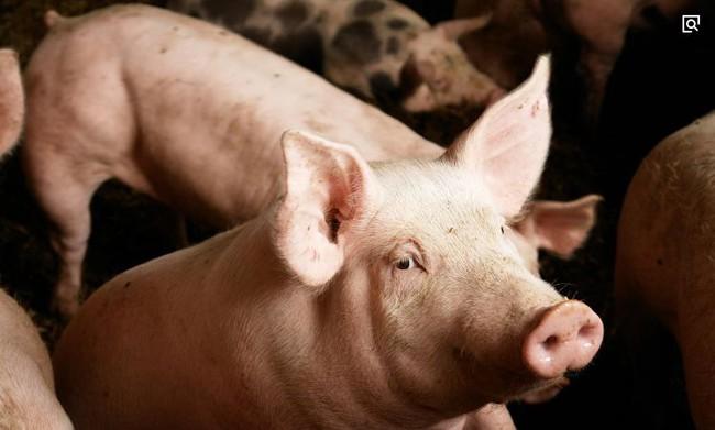 3 bộ phận cực quý giá của con lợn, vừa ngon vừa giàu dinh dưỡng mà ngay cả người bán cũng muốn giữ lại để ăn, người mua ít khi biết đến - Ảnh 1
