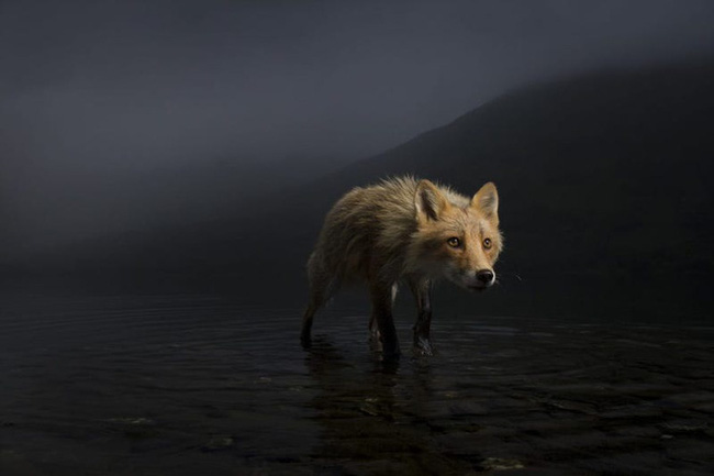 10 bức ảnh động vật hoang dã đẹp nhất năm 2021 và những câu chuyện hậu trường chưa kể - Ảnh 7.