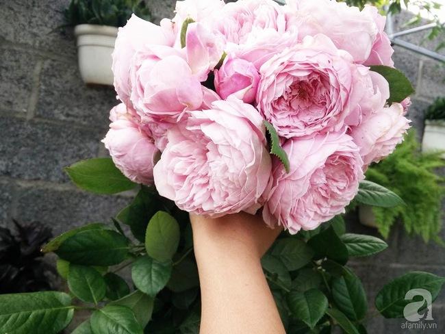 Bí quyết chăm sóc hoa hồng nở form đẹp, sai hoa như thợ vườn chuyên nghiệp của mẹ đảm ở Đak Lak - Ảnh 5.