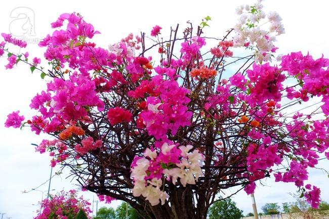 Ven Sài Gòn, có một con đường thơ mộng ngập tràn hoa giấy - Ảnh 6.