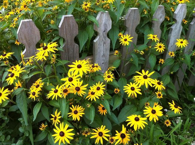4 ý tưởng trang trí sân vườn bằng các loài hoa cho mùa hè rực rỡ - Ảnh 5.