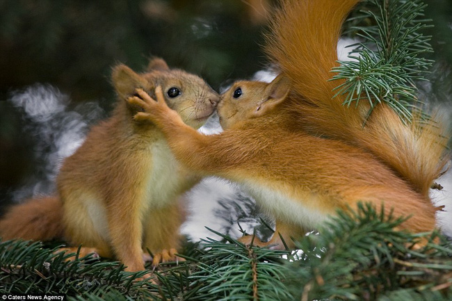 Những hình ảnh hơn vạn lời nói cho thấy động vật cũng có tình yêu đẹp thế này - Ảnh 1.