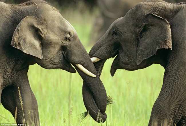 Những hình ảnh hơn vạn lời nói cho thấy động vật cũng có tình yêu đẹp thế này - Ảnh 10.