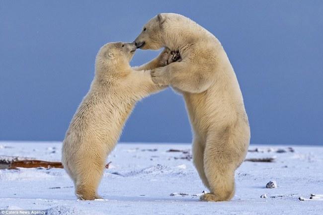 Những hình ảnh hơn vạn lời nói cho thấy động vật cũng có tình yêu đẹp thế này - Ảnh 11.
