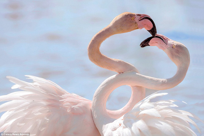 Những hình ảnh hơn vạn lời nói cho thấy động vật cũng có tình yêu đẹp thế này - Ảnh 12.