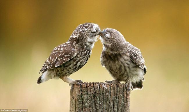 Những hình ảnh hơn vạn lời nói cho thấy động vật cũng có tình yêu đẹp thế này - Ảnh 4.