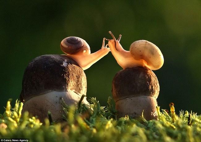 Những hình ảnh hơn vạn lời nói cho thấy động vật cũng có tình yêu đẹp thế này - Ảnh 7.