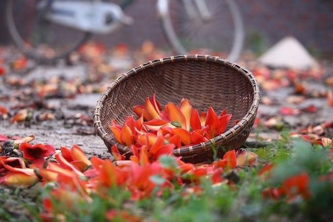 Tháng 3 mùa hoa gạo, đừng bỏ lỡ những bài thuốc chữa bệnh quý báu từ loại cây quen thuộc này - Ảnh 5.