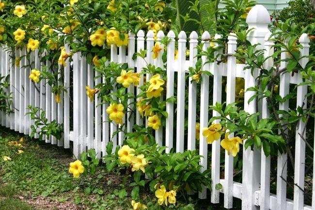 4 ý tưởng trang trí sân vườn bằng các loài hoa cho mùa hè rực rỡ - Ảnh 3.