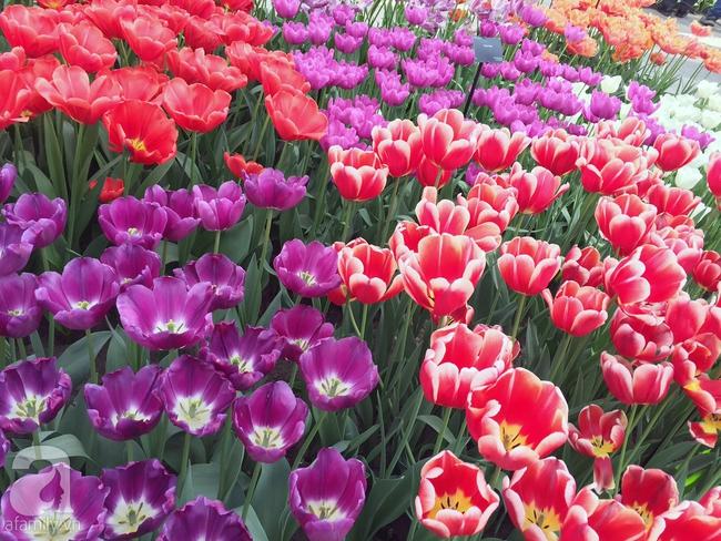 Lạc vào thiên đường hoa 7 triệu bông, một năm chỉ mở cửa một lần - Ảnh 16.