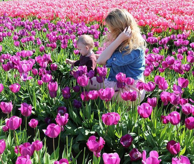6 khu vườn hoa tulip chỉ nhìn thôi cũng khiến người ta ngất ngây bởi quá đẹp, quá rực rỡ - Ảnh 8.