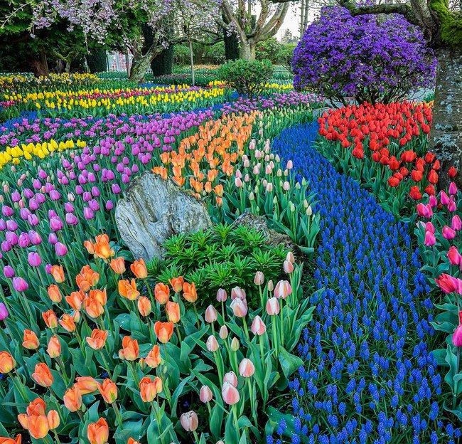 6 khu vườn hoa tulip chỉ nhìn thôi cũng khiến người ta ngất ngây bởi quá đẹp, quá rực rỡ - Ảnh 22.