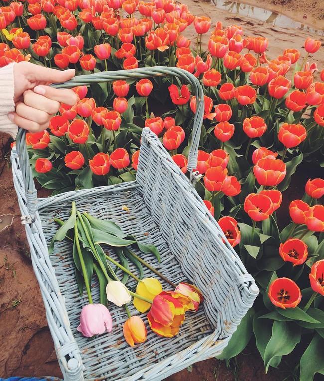 6 khu vườn hoa tulip chỉ nhìn thôi cũng khiến người ta ngất ngây bởi quá đẹp, quá rực rỡ - Ảnh 14.