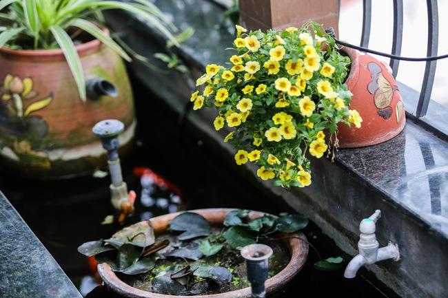 Ghé thăm ban công 30m² rực rỡ sắc hoa có view nhìn ra Hồ Tây của người phụ nữ yêu hoa cháy bỏng - Ảnh 12.