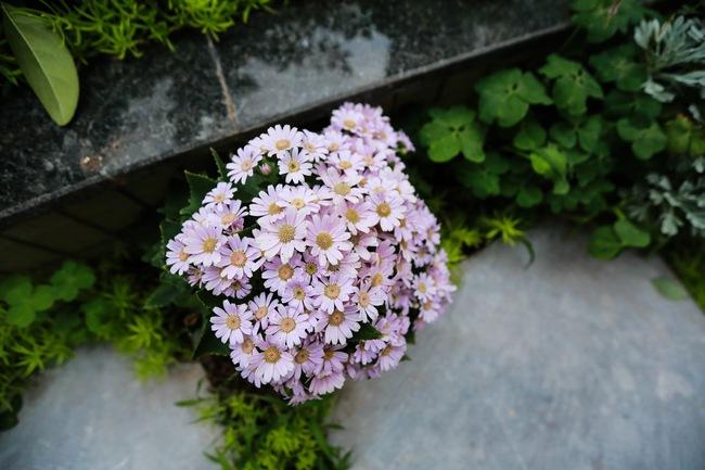Ghé thăm ban công 30m² rực rỡ sắc hoa có view nhìn ra Hồ Tây của người phụ nữ yêu hoa cháy bỏng - Ảnh 14.