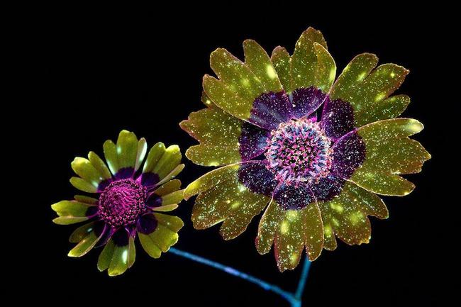 Khi những bông hoa phát sáng đẹp đến ngỡ ngàng - Ảnh 1.
