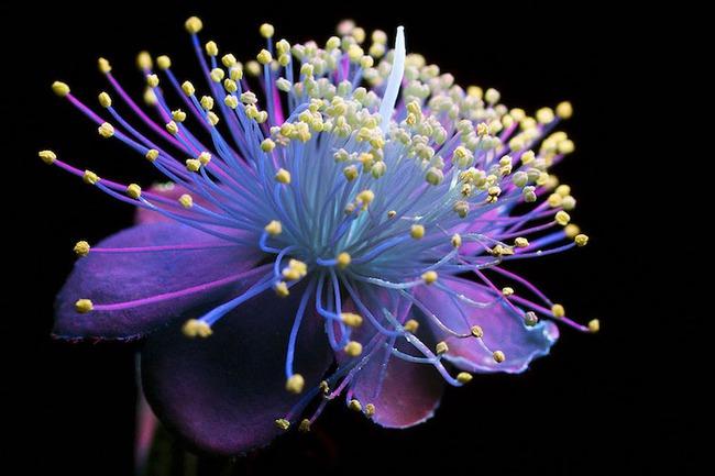 Khi những bông hoa phát sáng đẹp đến ngỡ ngàng - Ảnh 9.