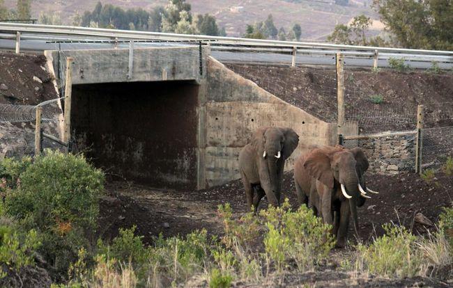 Những con đường độc nhất vô nhị trên thế giới được thiết kế dành riêng cho động vật - Ảnh 7.