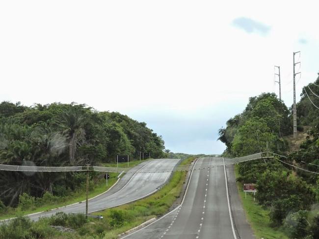 Những con đường độc nhất vô nhị trên thế giới được thiết kế dành riêng cho động vật - Ảnh 8.