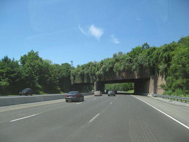 Những con đường độc nhất vô nhị trên thế giới được thiết kế dành riêng cho động vật - Ảnh 9.