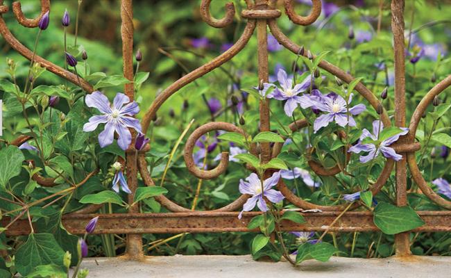 4 ý tưởng trang trí sân vườn bằng các loài hoa cho mùa hè rực rỡ - Ảnh 4.