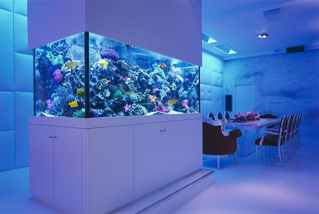 Bể cá được lồng ghép vào nội thất ngôi nhà, bạn đã biết xu hướng trang trí thịnh hành nhất hiện nay chưa? - Ảnh 4.