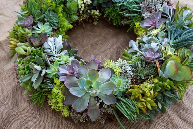 Ý tưởng làm vòng treo trang trí vườn vừa đơn giản vừa đẹp từ những cây mọng nước  - Ảnh 2.