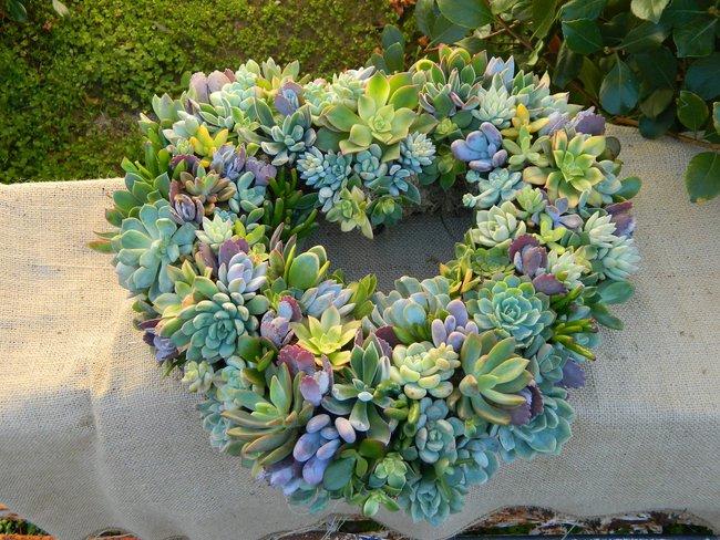 Ý tưởng làm vòng treo trang trí vườn vừa đơn giản vừa đẹp từ những cây mọng nước  - Ảnh 5.