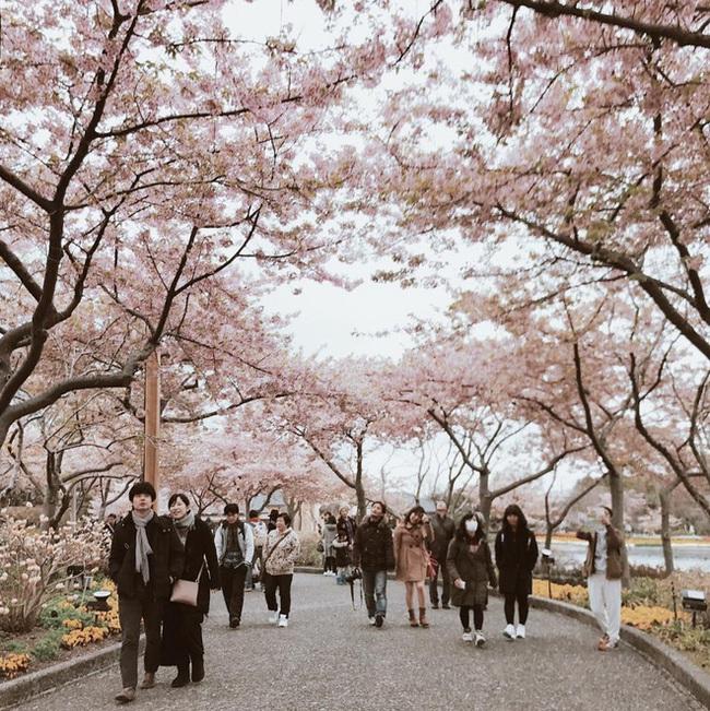 Ra đây mà xem người ta kéo nhau sang Nhật ngắm hoa anh đào hết rồi! - Ảnh 13.
