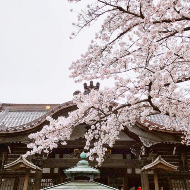 Ra đây mà xem người ta kéo nhau sang Nhật ngắm hoa anh đào hết rồi! - Ảnh 15.