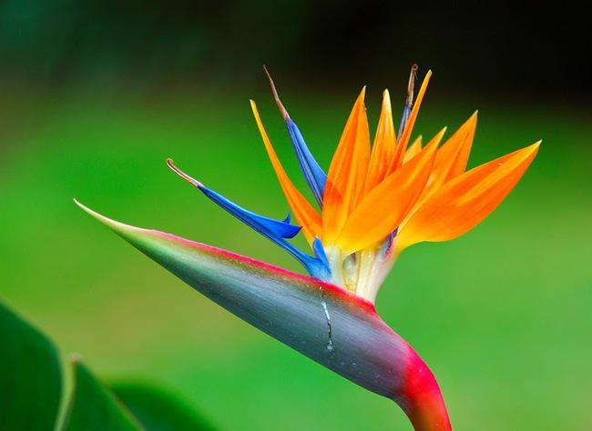 3 loài hoa quý nhà nhà dùng để chưng Tết nhưng cực độc với trẻ con - Ảnh 3.