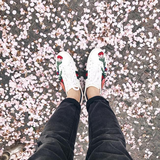 Ra đây mà xem người ta kéo nhau sang Nhật ngắm hoa anh đào hết rồi! - Ảnh 26.