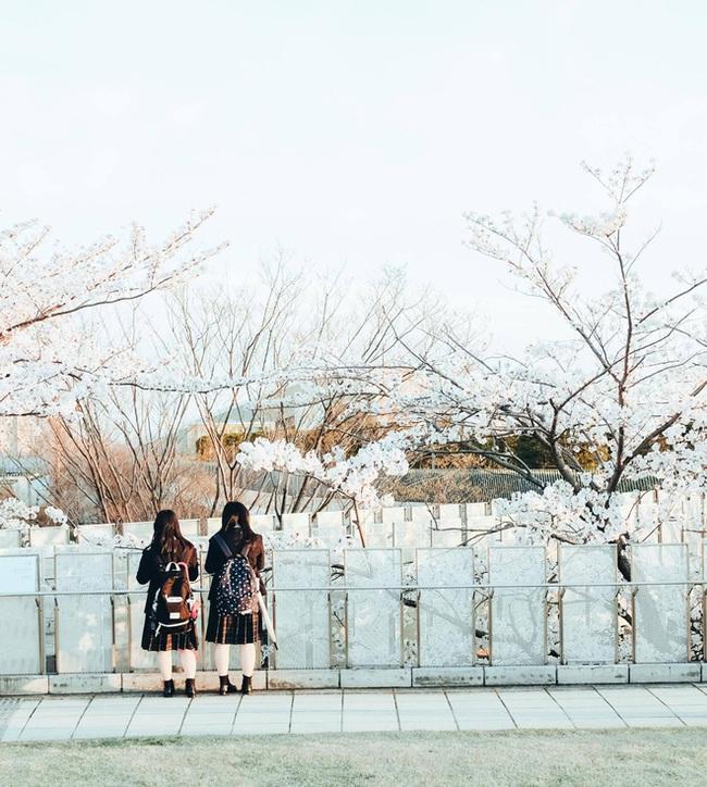 Ra đây mà xem người ta kéo nhau sang Nhật ngắm hoa anh đào hết rồi! - Ảnh 31.