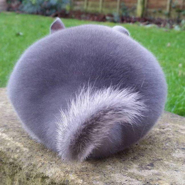 Nhìn qua cứ tưởng cục bông, lại gần ai cũng phải tan chảy trái tim với con vật đáng yêu này - Ảnh 1.