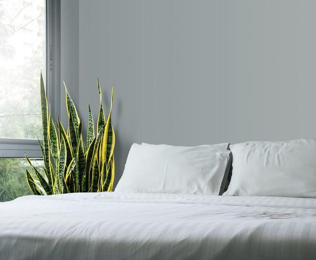 10 loại cây cảnh đẹp, dễ mua lại có tác dụng loại bỏ độc tố trong nhà - Ảnh 4.